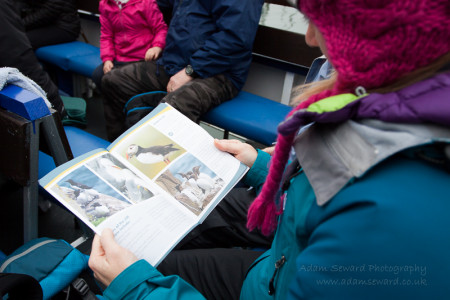 Reading the information booklet on the ferry - various species of auks can be seen.