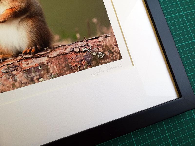 Detail of a framed print